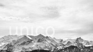 Unico Data AG Kundenprojekt Referenz FROX AG